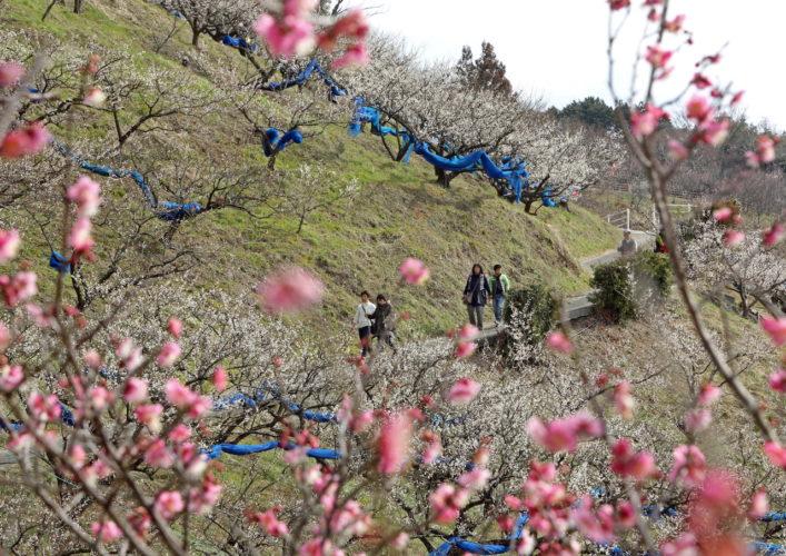 「春うらら」(吉野 菊夫(和歌山市井辺))